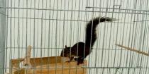 Após ser encontrado ferido, esquilo recebe atendimento no Centro de Controle de Zoonoses de Peruíbe